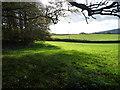 SD8161 : Sheep fields west of Longcroft Plantation by Christine Johnstone
