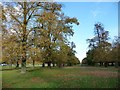 TQ1569 : Parallel rows of autumn trees in Bushy Park by Christine Johnstone