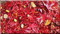 SO7119 : Fallen leaves by Jonathan Billinger