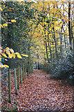 SU9186 : Shakespeare's Way in Woollmans Wood by Des Blenkinsopp