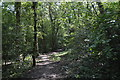 TQ1093 : LOOP, Oxhey Woods by N Chadwick