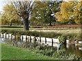 TQ1669 : Between Heron Pond and Leg of Mutton Pond, Bushy Park by Christine Johnstone