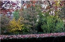 TL4358 : Robinson College garden by john bristow