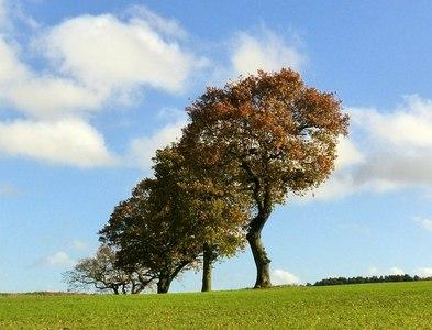 SK4849 : Hedgerow oaks near Felley Mill by Alan Murray-Rust