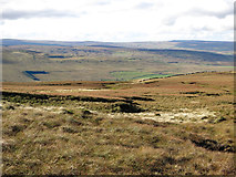 NY7837 : Yad Moss by Mike Quinn