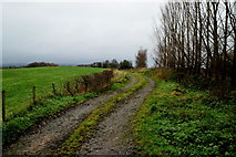 H4277 : Rough lane, Tattraconnaghty by Kenneth  Allen