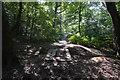 TQ1093 : LOOP. Oxhey Wood by N Chadwick