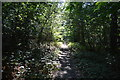 TQ1092 : LOOP, Oxhey Woods by N Chadwick