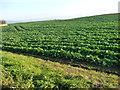 NZ5111 : Arable field, south of Newby Grange by Christine Johnstone