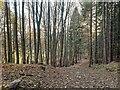 NH6343 : Forestry road Balnacraig by valenta