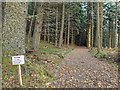 NH6243 : Into the dark forest by valenta