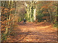 SU9485 : Mobility scooter in Burnham Beeches, with autumn leaves by David Hawgood