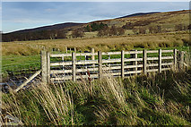 NJ1934 : A Sturdy Fence by Anne Burgess