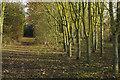 SP4210 : Eynsham Wood by Stephen McKay