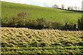 SX7744 : Valley near Sherford by Derek Harper