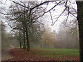 SP8808 : The Track to Boddington Bank in November, Wendover Woods by Chris Reynolds