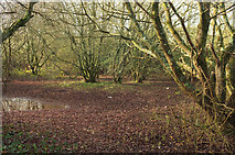 SX9066 : Damp woodland, Nightingale Park by Derek Harper