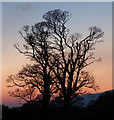 NS2072 : Trees in the gloaming by Thomas Nugent