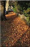 SX9065 : Leaves, Parkhurst Road, Torre by Derek Harper