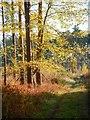 TL7896 : Autumn sunlight by David Pashley