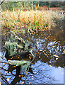 SU9584 : Old Wood in Upper Pond by Des Blenkinsopp
