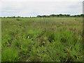 TG3723 : Floating mat of vegetation, Sutton Broad by Hugh Venables