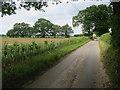 TG3920 : New hedge by Elderbush Lane by Hugh Venables