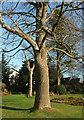 SX9265 : Trees, Tessier Gardens by Derek Harper