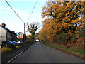 TF6819 : Houses along Brow of the Hill and autumnal oak trees by Adrian S Pye