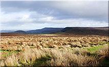 SE4699 : Scarth Wood Moor by Trevor Littlewood