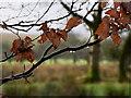 H4874 : Raindrops, Boheragh by Kenneth  Allen