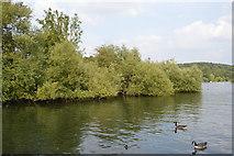 SU7682 : Island in River Thames by N Chadwick