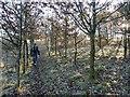 SK6667 : Path through Ollerton Pit Wood by Graham Hogg