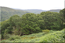 V9080 : Woodland at Ladies View by N Chadwick
