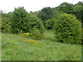 TQ4257 : Grassy bank, Tatsfield by Robin Webster
