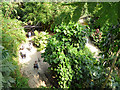 SX0455 : Eden Project - looking down on the rainforest   by Stephen Craven