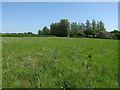 TL4069 : Field in Willingham by Hugh Venables