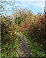 SX9066 : Path into Nightingale Park by Derek Harper