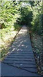 TQ5940 : Boardwalk into Roundabout Wood by John P Reeves