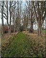 NH5963 : Foulis Castle Driveway by valenta