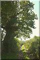 SX8458 : Crownley Lane by Derek Harper
