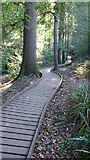 TQ5940 : Boardwalk through Roundabout Wood by John P Reeves