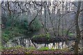 NT6424 : Pond at Harestanes by Jim Barton