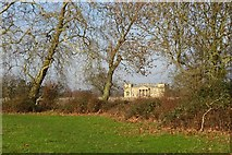 SO8844 : London plane trees in Croome Park by Philip Halling