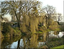 SE5726 : Weeping willow, West Haddlesey by Alan Murray-Rust