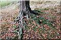 SD6053 : Tree roots by Bob Harvey