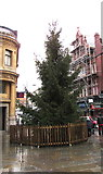 ST3188 : City centre Christmas tree, Newport by Jaggery