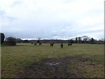 SU9320 : Horses in a field opposite Selham Church by Basher Eyre