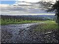 SU9422 : Vineyard beside River Lane by Chris Thomas-Atkin