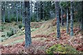 NO3494 : Pinewood track into Altcailleach Forest by Alan Reid